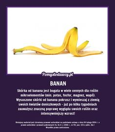 nawoz z banana Pam Pam, Simple Life Hacks, Kitchen Hacks, Good Advice, Amazing Gardens, Good To Know, Tricks, Frugal, Health And Beauty