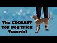 The COOLEST toy dog trick tutorial!- click dog training tricks