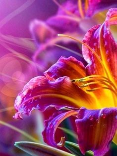 New amazing flowers pics every day, be the first to see them! Fantastic flowers will make your heart open. Exotic Flowers, Amazing Flowers, Beautiful Flowers, Beautiful Gorgeous, Purple Flowers, Fresh Flowers, Flower Power, Day Lilies, Mother Nature