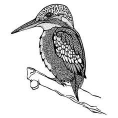 Wat is de ijsvogel een prachtig dier! Na veel foto's te hebben bestudeerd en bewonderd (wonderlijke kleuren en vleugelpatronen) + filmpjes te hebben gekeken (fantastische duikkwaliteiten) heb ik deze vogel getekend. #vogel #bird #birddrawing #vogeltekenen #ijsvogel #kingfisher #patronen #patterns #pattern #illustratie #illustration #art #creativelife #createeveryday #creativelifehappylife #tekenen #tekening #draw #drawing #blackandwhite #iblackwork Kingfisher Bird, Bird Coloring Pages, Bird Illustration, Birds, Ink, Drawings, Plane, Instagram Posts, Colour
