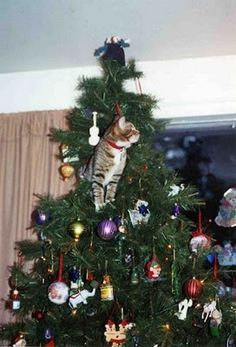Curious, Funny Photos / Pictures: Cats on Christmas Trees - 19 Pics