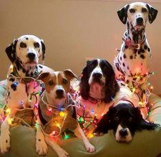 Good dogs.......