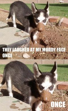 Don't mess with huskies