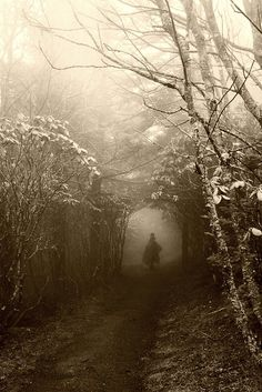 Spooky Places…Swallowed by the Fog - Gothic Life Dark Photography, Black And White Photography, Winter Photography, Landscape Photography, Wedding Photography, Dark Forest, Foggy Forest, Magical Forest, Dark Places