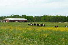 Wolfe's Neck Farm, Freeport, Maine  http://www.wolfesneckfarm.org