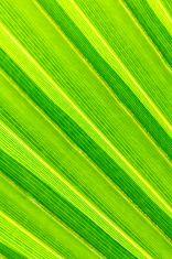 Green palm tree leaf background stock photo