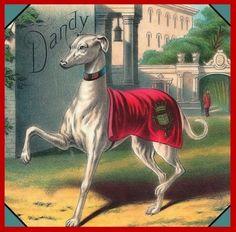 Aimant de réfrigérateur de chien lévrier Royal Dandy