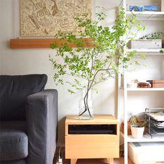 【スタッフの愛用品】枝ものも安心して飾れるフラワーベースで、家に新しい景色ができました。 – 北欧、暮らしの道具店 Ikebana Flower Arrangement, Flower Vases, Exterior Design, Interior And Exterior, Bridal Show Booths, Plant Art, Interior Plants, Green Flowers, Cool Rooms
