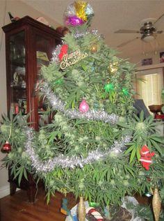 www.marijuanaplug.com
