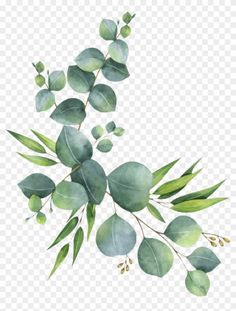 Watercolor Leaves, Watercolor Texture, Floral Watercolor, Flower Png Images, Theme Nature, Leaf Clipart, Leaf Border, Aesthetic Stickers, Koala Tattoo