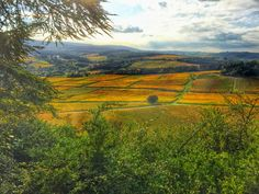 Autumnal colours in Burgundy