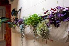 Plantas en cuartos de baño