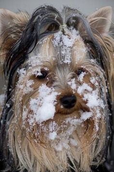 a face full of snow