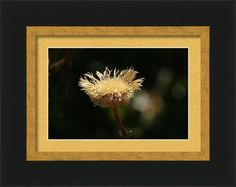 Nature Framed Print featuring the photograph A Dead Beauty by Sheila Brown