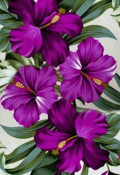 Purple flowers varieties and types - Painting Subjects Flower Backgrounds, Flower Wallpaper, Flower Canvas, Flower Art, Flower Ideas, Dark Purple Flowers, Purple Orchids, Arte Floral, Flower Pictures