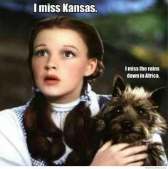I don't think most of my college students would even get this funny Wizard of Oz meme. Dorothy: I miss Kansas. Toto: I miss the rains down in Africa. Humor Mexicano, I Smile, Make Me Smile, The Fevers, Miss Kansas, Kansas City, Funny Celebrity Pics, Haha, Youre My Person