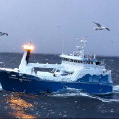Catching cod fish in Bering sea...