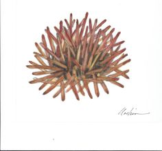 3B - For the back cover of the short story, this is Mary Helsaple's watercolor of the urchin.