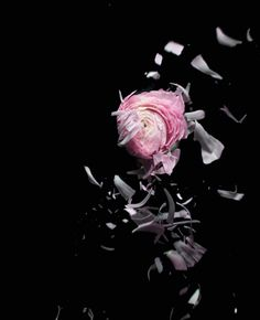 Exploding flowers by Eric André, via Behance