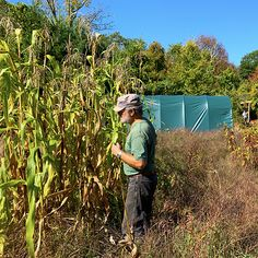 Haynes takes you through the process of growing and processing corn to make posole at www.stowefarm.org