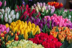 Flowers Today, Send Flowers, Cut Flowers, Fresh Flowers, Spring Flowers, Flower Bouquets, Tulips Garden, Planting Flowers, Daffodils