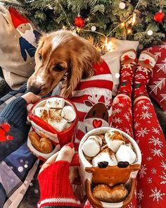 Cosy Christmas, Christmas Feeling, Days Until Christmas, Christmas Room, Christmas Wonderland, Little Christmas, Christmas Movies, Merry Christmas, Xmas