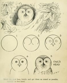 How to draw an owl, 1921