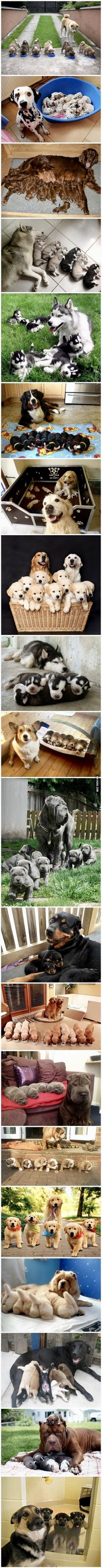 Proud Parents and their Pups