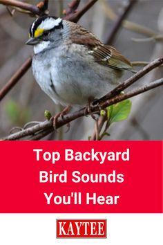 Bird Facts, Bird Identification, Garden Animals, Rare Birds, Listening Skills, Backyard Birds, Bird Pictures, Birdwatching, Walkways