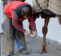 The Farrier's Role in Horse Hoof Care