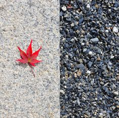 Concrete, red maple leaf, and stones in a Japanese garden.