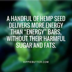 """A Handful of Hemp Seed Delivers More Energy Than """"Energy"""" Bars, Without Their Harmful Sugar and Fats. #hempfact #hempseeds"""