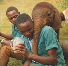 oh my heart..!! From : @dswt - #tbt 1990: Weve raised lots of mischievous orphans in our time (Wendi Kithaka and Esampu immediately come to mind) but Ajok holds the title of original prankster! One of his favorite tricks was to snatch the hats right off visitors heads. When he wasnt wreaking havoc he loved to give trunk hugs. We rescued Ajok in 1990 when he was just days old. He graduated from our care several decades ago but we have no doubt that his mischievous antics extended to the wilds…