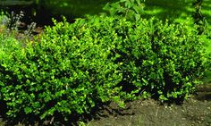 Buxus Sempervirens, Planters, Herbs, Garden, Patio, Photo Illustration, Garten, Gardening, Planter Boxes