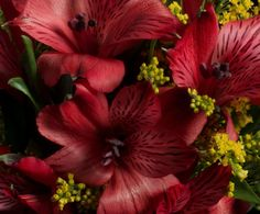 Red Alstroemeria & new work coming up!
