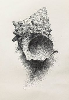 Sam Kim, Shell2 | Pen drawing, 2012 Art Drawings Sketches, Pencil Drawings, Shell Drawing, Drawing Drawing, Stippling Art, Observational Drawing, Still Life Drawing, A Level Art, Chiaroscuro