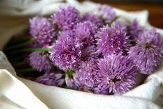 Schnittlauchblüten sammeln Party Buffet, Chutney, Dips, Pesto, Cabbage, Bbq, Spices, Food And Drink, Herbs