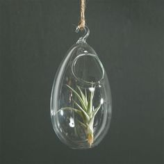 Air plants hanging from rope in your trees will draw the eye up in your outdoor space and feels really bohemian.