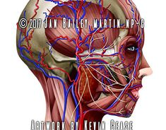 Basic Facial Anatomy for botox injector practitioner