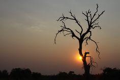 The sun sets in Savute, Botswana. #Africa #Travel #safari #sunset