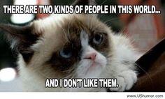 Grumpy-cat-august-2013.jpg (720×436)