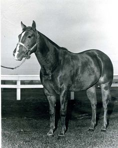 107 Best Hall Of Fame Horses Images American Quarter Horses