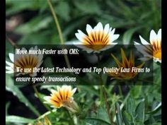 Conveyance Solicitors quotes from Conveyancing Marketing Services Ltd Latest Technology, Marketing, Videos, Flowers