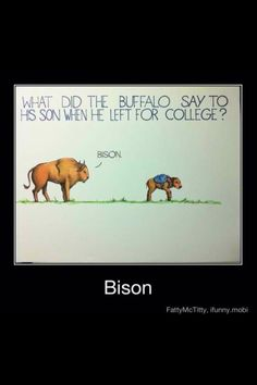 Here's a good buffalo pun for the day.