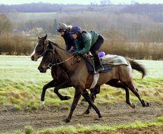 Horse race  http://sportsbettingarbitrage.in