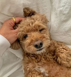 Cute Puppies, Cute Dogs, Dogs And Puppies, Doggies, Animals And Pets, Funny Animals, Cute Little Animals, Cute Creatures, Baby Dogs