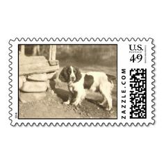 @@@Karri Best price          	Vintage Dog Postage! Retro Spaniel Stamp!           	Vintage Dog Postage! Retro Spaniel Stamp! This site is will advise you where to buyHow to          	Vintage Dog Postage! Retro Spaniel Stamp! lowest price Fast Shipping and save your money Now!!...Cleck Hot Deals >>> http://www.zazzle.com/vintage_dog_postage_retro_spaniel_stamp-172178822838301426?rf=238627982471231924&zbar=1&tc=terrest