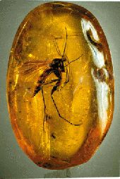 From the Palanga Amber Museum