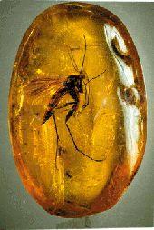 Minerals And Gemstones, Crystals Minerals, Rocks And Minerals, Stones And Crystals, Amber Fossils, La Rive, Dinosaur Fossils, Prehistoric Animals, Ancient Artifacts