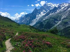 Wildflowers along the Tour du Mont Blanc Italy. [OC][32642448] ihasbike http://ift.tt/2fQurdI August 18 2017 at 06:31AMon reddit.com/r/ EarthPorn